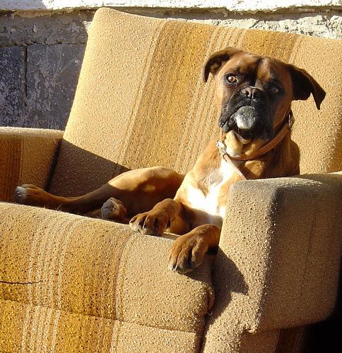 Watchdog2