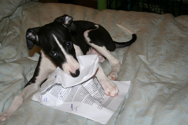 Sorry, Joe Public, the dog destroyed all records of our Super Committee recommendations